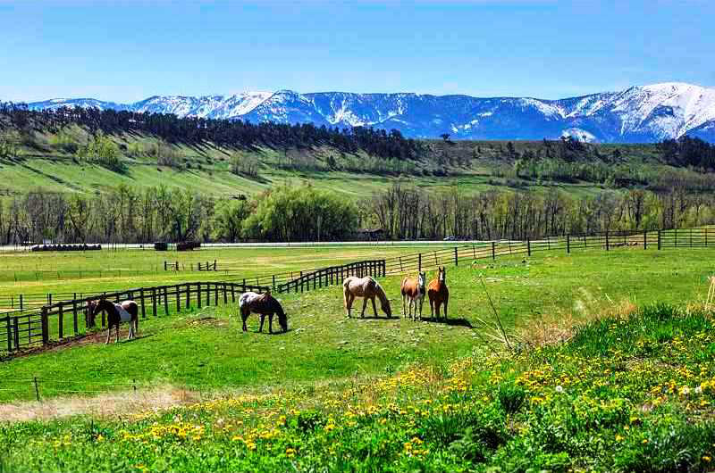 Horse Property For Sale In West Texas