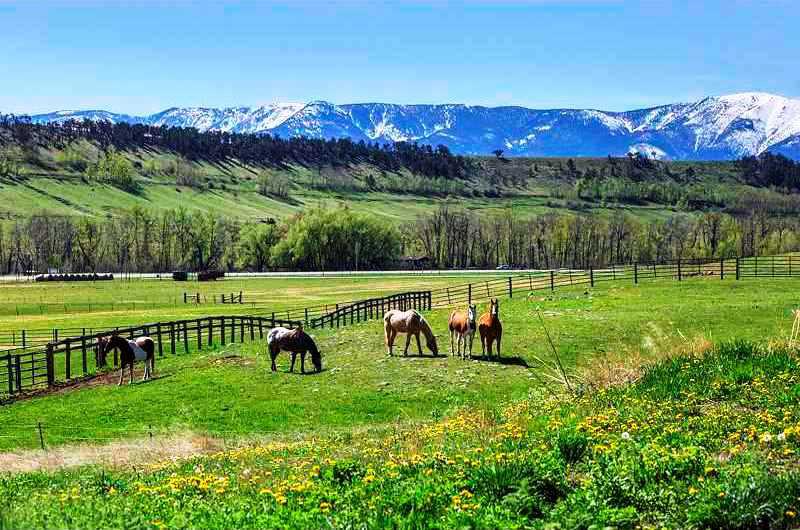 spectacular-horse-property