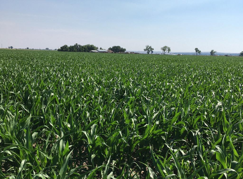 Bighorn-Irrigated-Farm