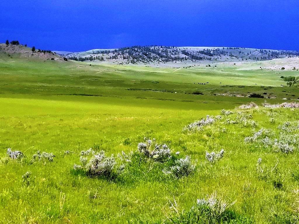 Shane Ridge Ranch